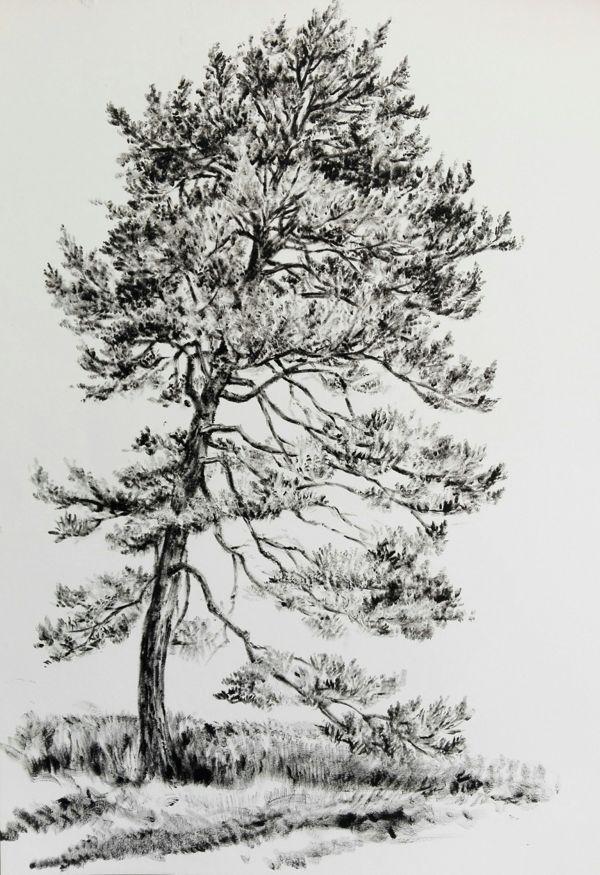 Carmen-Meiswinkel-Kiefer-Oel-auf-Papier-40-x-60-cm-2020