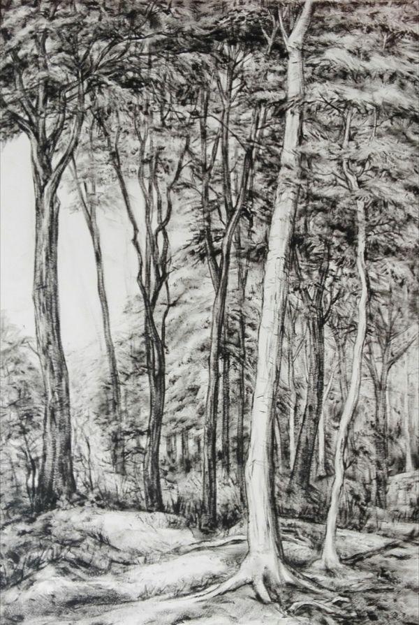 Carmen-Meiswinkel-Kothener-Wald-Oel-auf-Papier-40-x-60-cm-2020