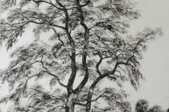 Carmen-Meiswinkel-Japanischer-Ahorn-Oel-auf-Papier-40-x-60-cm-2020