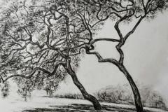 Magnolien-Oel-auf-Papier-40-x-60-cm-2020