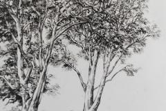 Platanen-Oel-auf-Papier-40-x-60-cm-2020